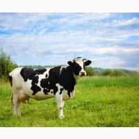 Закупівля на м'ясо ВРХ, коней та корів на тримання