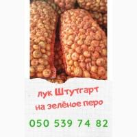 Лук цибуля Штутгарт на перо урожай 2020 г