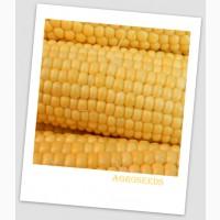 Продам Насіння надцукрової кукурудзи Багратіон, 50 шт