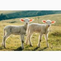Корм для коз ягнят овец универсальный
