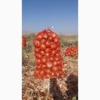 Экспорт лука из Узбекистана
