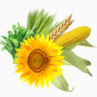 Семена яровых. Высокое качество - Высокий урожай. Агротрейд