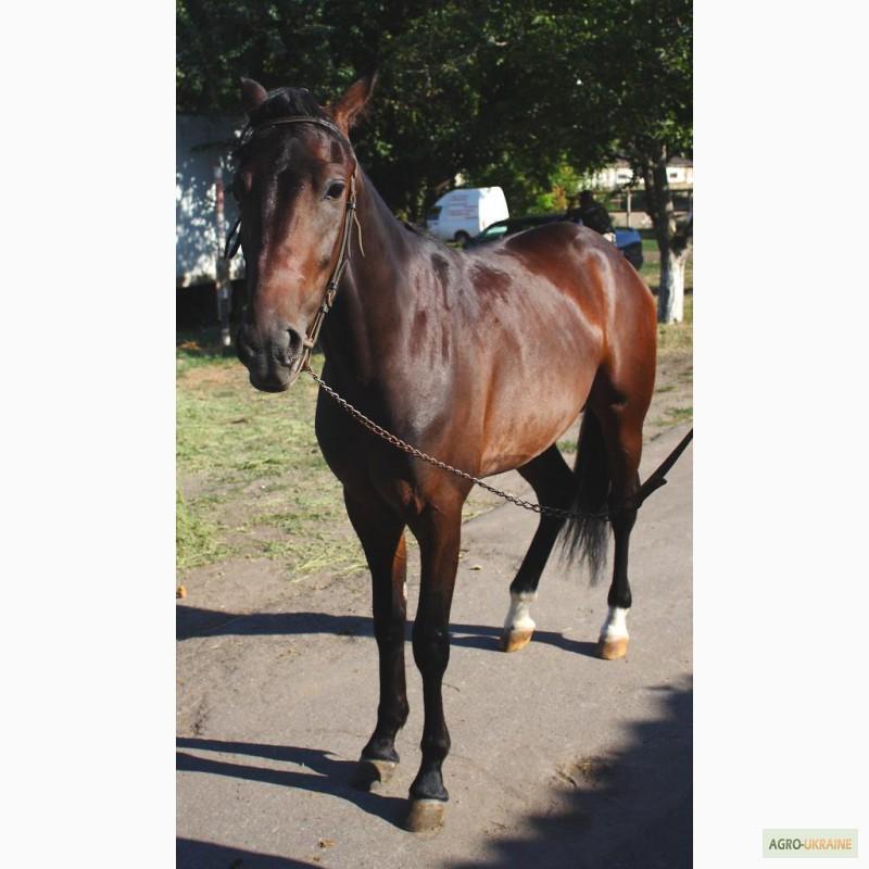 Продажа лошадей в украине