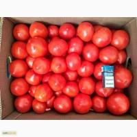 Продаём помидор. Домашний-грунтовой : Ляна