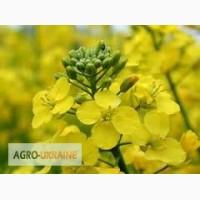 Продаем средства защиты растений для рапса оптом