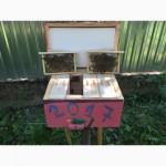 Матка Карпатка 2017 ПЛІДНІ БДЖОЛОМАТКИ ( Пчеломатки, матки )