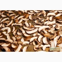 СОК Шепітчанка продає гриб білий висушений за новітніми технологіями - 1100 грн./кг