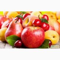 Саджанці яблунь, груш, абрикос, персиків, черешень, вишень