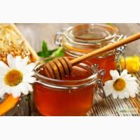 Куплю мёд