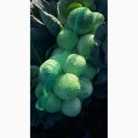 Продам капусту коло Умані