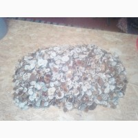 Продам сухий гриб