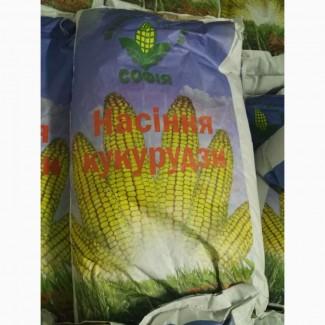 Продам гібрид кукурудзи ГОЛОСІЇВСЬКИЙ 260 СВ (Урож.2017 р.)