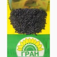 НК «ГРАН» пропонує насіння соняшнику Карат ( ПІД ГРАНСТАР / ПОСУХОСТІЙКИЙ )