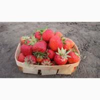 Продам свежие ягоды: клубника, смородина, малина