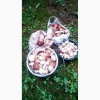 Білі гриби. Продаж. Обмін