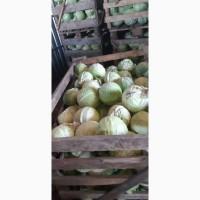 Продаем капусту белокачанную
