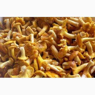Лисички грибы замороженные
