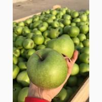 Продам яблуко Голден Делішес, Грені Сміт, Фуджі, Ред Чіф