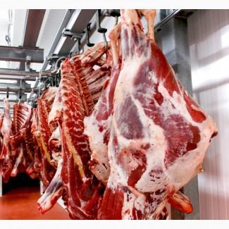 WIDELAND EXPORT продает говядину HALAL замороженную на эксп