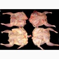 Купить крупную тушку перепела (мясо перепелов) для мангала