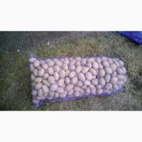 Продам семенной картофель сорт Белароса, Королева Анна, Гала, Тоскана