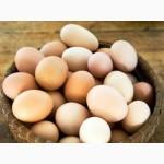 Натуральные домашние куриные яйца