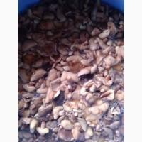 Продам грибы маслята соленные бочковые