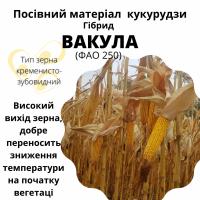 Насіння кукурудзи гібрид - Вакула (ФАО 250)