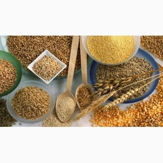 Продам КРУПИ оптом від виробника: ячка, перловка, пшенична, кукурузна, горох