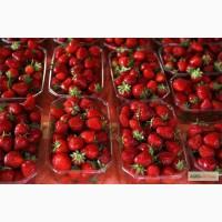 Пластиковый лоток для ягод, пинетка