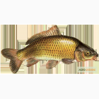 Продажа свежей рыбы и балыковых изделий