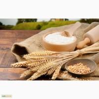Борошно пшеничне від виробника Житомир та Житомирська область