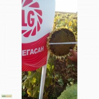 Подсолнечник семена Мегасан