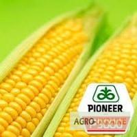 ОРИГІНАЛ!!! Насіння кукурудзи Pioneer P9000 (Піонер П9000)