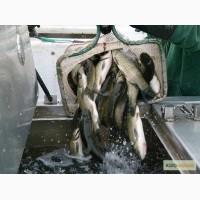 Продам живую рыбу малька а таже живые раки