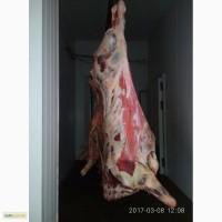 Мясо говядины на экспорт