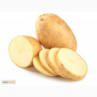 Куплю картофель в Киевской области от 10 тонн. Самовывоз. Обращайтесь