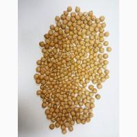 Семена нута сорт Розанна