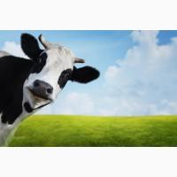 Продам молоко коровяче
