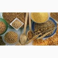 Продам зернові культури оптом