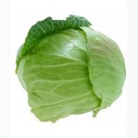 Закупаю молодую капусту крупным и мелким оптом