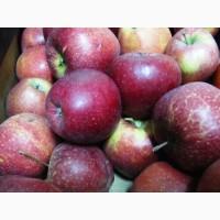 Яблоко разных сортов продадим оптомАгро фирма