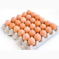 Куриное яйцо от производителя г.Донецк