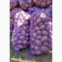 Картофель сорт белая роса доставка