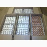 Продам яйца куриниеи