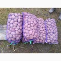 Куплю картоплю в Рівненській та Волинській області