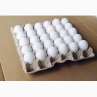 Закупаем яйца