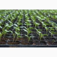 Выращу рассаду всех видов растений