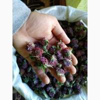 Цвіт Конюшини (Клевера) за 1 кг