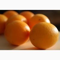 Закупаем апельсины оптом